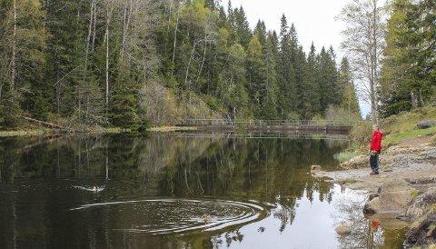 LEGGES NED: NRV varslet at blant annet Åmotdammen (bildet) kan bli lagt ned da ingen vil overta dammen. Vannverket har ikke lenger bruk for den gamle drikkevannsdammen. Foto: Rune Fjellvang