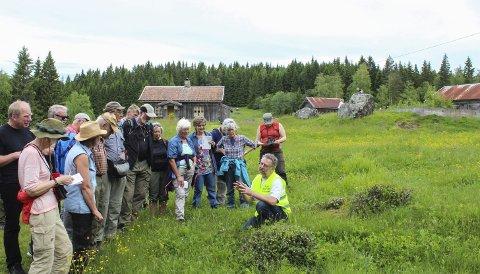 Karrig og unik: Peder Madsen i Norsk Botanisk Forening forklarer hvordan den unike floraen på Mikkelrud har blitt bevart. Søndag var det Villblomstenes dag på Mikkelrud.Alle foto: Rune Fjellvang