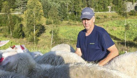 – Frustrerende: Sauebonde Audun Knutsen ønsker seg et lovverk som gjør det enklere å jakte på ulv. – Når vi først har bestemt oss for å ha husdyrhold og beitedyr i Norge, må lovverket legge til rette for det, sier han.Foto: Remi Presttun