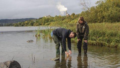 Tar Prøver: Forskerne Thomas Jensen og Ann Kristin Schartau fra NINA tar prøver av vannet og dyrelivet i Snekkervika i Øyeren for å kartlegge vannkvaliteten. Alle foto: Rune Fjellvang