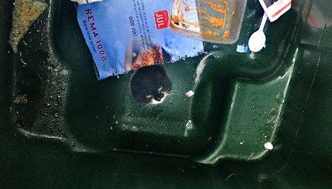 IKKE HELT SOM PLANLAGT: Katten i Håkon Gamles gate fikk seg en litt annen morgen enn planlagt.