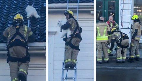 STIG I STIGEN: Stig Heistad og brannvesenet i Risør reddet ned en katt som hadde forvillet seg opp på et tak i Strandgata søndag. Foto: Kjell Mac Donald