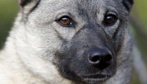 En jeger savner kanskje elghunden sin i dag.
