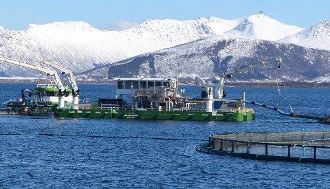 Den nye miljøflåta pumper fisken gjennom en tank med temperert sjøvann, som gjør at lusa slipper taket. (Alle foto: Sverre Idar Lakså)