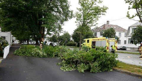 En stor grein fra et av trærne i Karmsunddgata knakk i vinden og tok med ledninger og en stolpe.