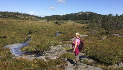 Godt synlig:  Stien til Bårdshaugvatna er godt synlig og er delvis merket med varder og rødmalte pinner.