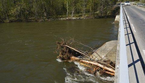 STABILT: Det er høy vannføring i Eibyelva for tiden. Faren for at den går over sine egne bredder er lav, men det er en del trær som har gått med i flommen i år.