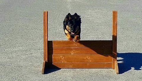 HUNDEDRØM: Koronakrisen har ført til økende interesse forf å kjøpe hund.