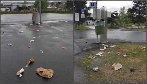 FLYTER: Fugler og dyr drar utover søpla fra overfylte dunker på Mjøsstranda.