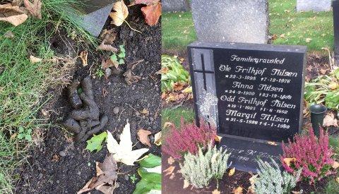 RESPEKTLØST: Thor Frithjof synes det er respektløst at folk lar det se slik ut på kirkegården. Foto: Privat/Fotomontasje