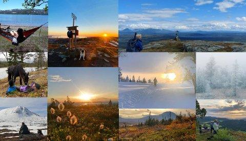 FINALISTER: Ti bilder passerte nåløyet av 130 innsendte bilder. Nå er det du som skal avgjøre hvem som har tatt det beste bildet i jubileumsåret til «Kjentmannsmerket» i Verdal.