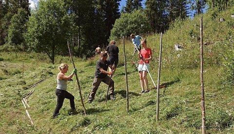 Kurs: Ljåslått med hesjing og berging av høy i en vakker slåtteeng på husmannsplassen Dalen i Øystre Slidre.