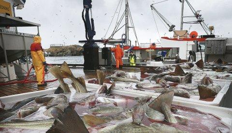 Fest i fiskeriene: Her fra skreifiske på Røst 2017. Foto: Tom Melby