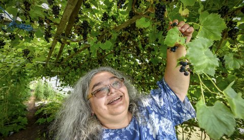 I det store drivhuset har Kleo og Sigbjørn druer som de lager sin egen vin av. – Den blir kjempe god, sier de.