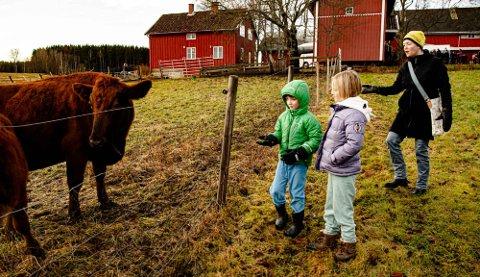 """TILBLAKE: Lene Luck er tilbake på """"gamle trakter"""" og har med seg barna Jakob (6) og Anna (9) til Holstad. Her er det kuene som skal få litt ekstra julemat."""