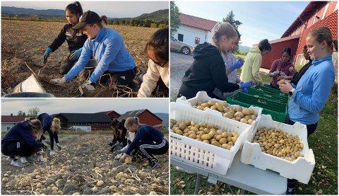 VANDRERUSS: 16 russejentene fra Øvre Eiker og Drammen har bestemt seg for å ikke bruke masse penger på buss. Nå samler de inn penger til russetiden 2021, blant annet ved å plukke poteter på Loe gård.