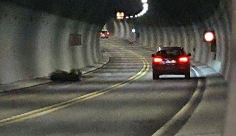 JULETREIVEIBANEN:Så lite skal til for at Hagantunnelen stenges for trafikk.