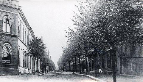 Et knippe gamle bilder fra Nansetgata, alle tatt mellom 1905 og 1910. Nederste del av Nansetgata med lindealleen, som dannet ubrutte rekker langt oppover på Nanset.