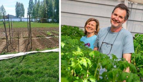 DE HAES GARTNERI: Birgitte og  Arvid Udo De Haes fra Jevnaker sørger for næringsrik mat til Farmen-deltagerne som flytter inn på Nedre Finneplassen ved Hallingby.