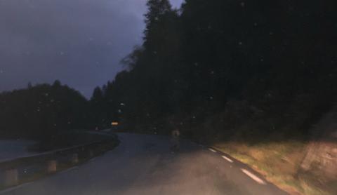 IKKE HELT STØDIG: Lørdag morgen sjanglet elgen rundt på fylkesvei 469 ved Skolla i nærheten av Fjellse.