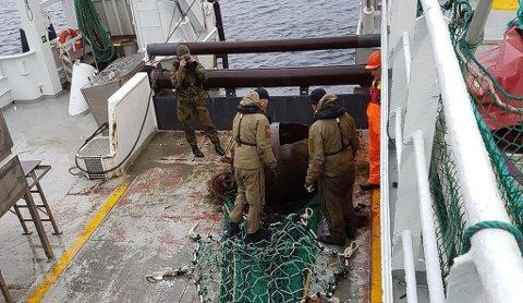 MINE: Under ei tokt med forskingsbåten «Kristine Bonnevie» i Sognefjorden fekk båten denne mina i trålen. Forsvaret kom og undersøkte mina.