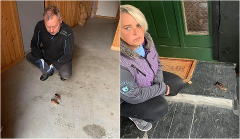 MUS: Roger Løvbrøtte og Sølvi Marthins har tatt 31 mus i løpet av elleve dager.