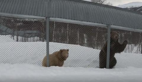 UTE AV HIET: Bjørnene «Salt» og «Pepper» er våkne etter vinterdvalen. Men, parken er stengt de fleste ansatte er permitterte.
