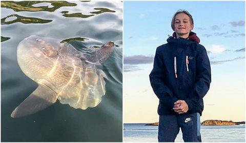 MÅNEFISK I DALSFJORDEN: Fredrik Hjelmeland såg ein månefisk i Dalsfjorden denne veka.