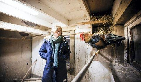 MASAKRE: For andre gang på under et år har det kommet en hund inn i Synnøve Nilsens hønsehus og drept høner.