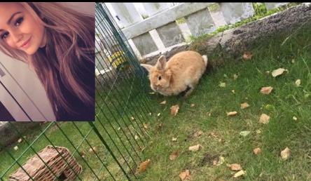 Her er Helle Saxegaard (innfelt) sin kanin i luftegården sin, før den rømte. En leteaksjon på Nordstrand resulterte dessverre ikke i at den ble funnet. I stedet fant letegruppen en annen rømling som fikk et nytt hjem. Begge foto: Privat