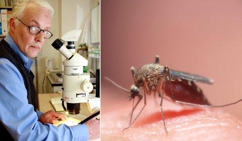 MYGGFORSKER: – Vi hadde klart oss veldig fint uten myggen, sier professor emeritus Arne C. Nilssen. Han har jobbet med mygg i 30 år.