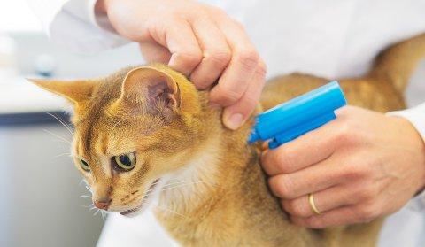 Dyrebeskyttelsen Norge krever at det blir lovpålagt å ID-merke kjæledyr.