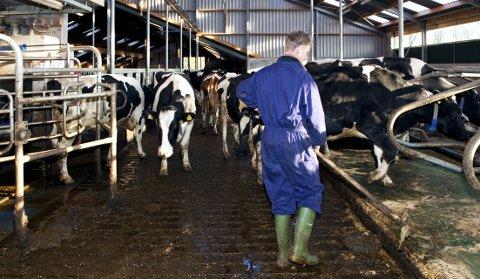 BONDENS ALDER: Statistisk sentralbyrå publiserte nylig en statistikk som viste alderssnittet blant eiere av landbrukseiendommer i Norge. I Slidre-kommunene er bonden i snitt 55,8 år gammel. (Illustrasjonsfoto)