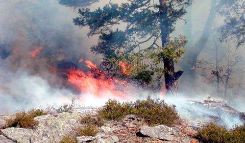 Skrekkscenario: En skogstur med bålbrenning i skogen fra og med 15.april kan koste både deg og omgivelsene dyrt. illustrasjonsfoto