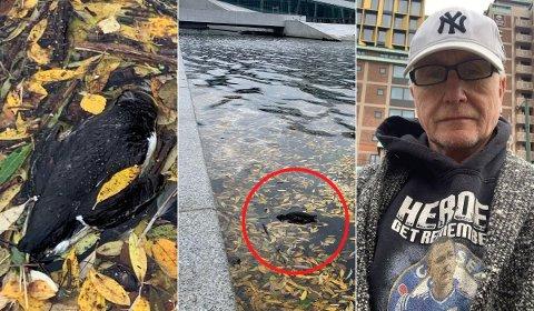 FRUSTRERT: – Dette går ikke, sier Ole Tommy Sand om de døde lomvi-fuglene han oppdaget i Oslofjorden søndag formiddag.