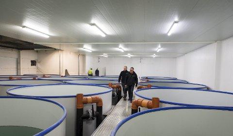 Byggetrinn 2: Her skal generasjon 2 av Aminors flekksteinbit inn i desember. Etter planen skal de være klar til slakting fra september 2018, da produksjonen skal opp i ett tonn per uke. Og utenfor hallen legges det ned rør som skal forsyne to nye haller på 1.500 og 1.000 kvadratmeter med sjøvann fra 60 meters dyp.Alle bilder: Johan Votvik