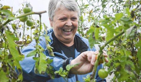 SISTE REST: Tomatene er nesten ferdige for i år, men Liv Nes Sønju fant noen å fylle i grønnsaksposen sin.