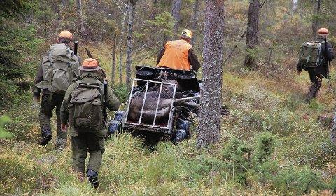 MINDRE JAKTUTBYTTE: Det ble felt og kjørt til bygds 94 færre elg i Aurskog-Høland i 2016 enn i 2015. Det viser de nye fellingstallene. Foto: Øivind Eriksen
