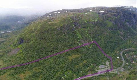 Dette bildet viser en oversikt av fjellsiden ovenfor planområdet, som er markert med lilla tegning. Dalsiden er stort sett dekket av velutviklet skog. Områdene med mindre skog er mer skredutsatt, og er markert med grønn tegning. Her er det også steinsprang-ur.