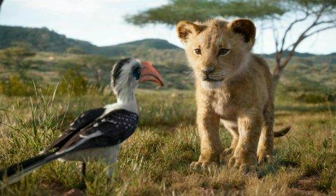 LEVENDE MODELL: Et sted i Afrika tasser en ung hannløve rundt intetanende om å ha vært fysisk inspirasjonskilde til denne karen - dataanimerte Simba.
