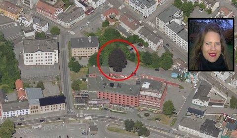 BORTE VEKK: Den gamle blodbøken hadde sin plass i området bak Grand Hotell. Den skilte seg ut blant de andre grønne bøketrærne om sommeren, men nå er det tatt bort. Nå mener Janne Ekmann at utbyggerne burde ha bygd rundt blodbøken. – Det hadde nok gjort området kjempefint, sier Ekmann.