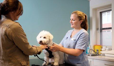 Å vaksinere kjæledyret er viktig for at ikke dødelige sykdommer skal blusse opp igjen og spre seg.