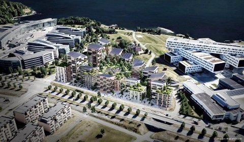 NY BYDEL UT MOT FJORDEN: Rundt 400 leiligheter kan få plass på eiendommen mellom Telenor (t.v.) og Statoil (t.h.) dersom kontorkjempen AkersHus - som i dag står midt imellom - blir revet og bygd om til boliger.