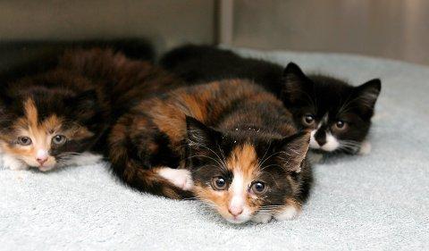 TRENGER JEVNLIG TILSYN: Katter skal ikke overlates til seg selv om du reiser bort på ferie.