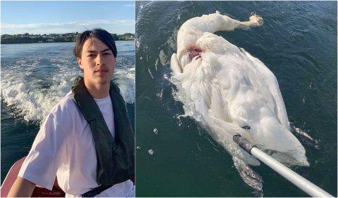 MANGER: Sebastian Svenheim har fleire gonger møtt på svanene på sjøen. No er ein av dei død.
