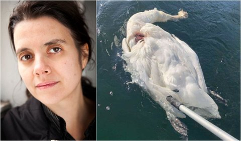 Siri Martinsen sier det er et grovt brudd på dyrevelferdsloven, dersom svanen faktisk er blitt drept.