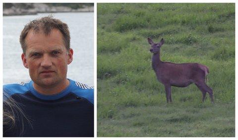 PROBLEM: Dette dyret ser Ørjar Eiken ofte 20 av på bøane sine kvar kveld.