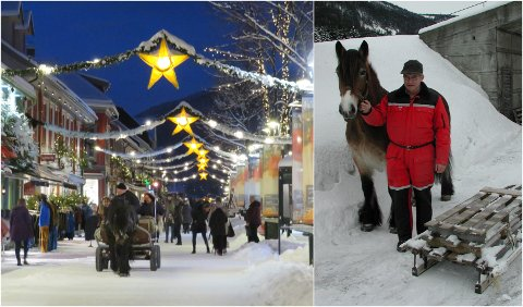 Nils Trinerud fra Gausdal har avlet frem dølahester i 40 år. Han mener det er bare positivt for hesten å brukes til kanefart.