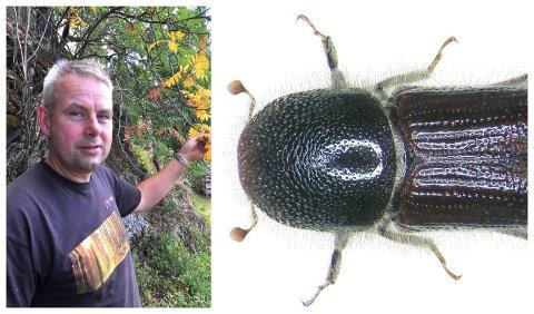 TØRT I SKOGEN: Johannes Bergum, skogsjef i Mjøsen skog, frykter at barkebillene har optimale forhold i det tørre, varme været. Store mengder biller kan skade skogen.