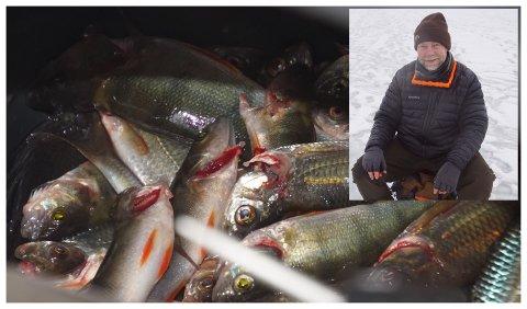 160 KILO FANGST: De 160 kiloene med fisk som ble tatt opp av Jarenvatnet lørdag besto av mort, abbor og noe sik. Vidar Fjellhammer mener det er bra å få rensket opp litt.